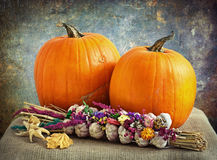 Pumpkins and garlic Royalty Free Stock Images