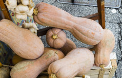 Pumpkins and garlic. For sale at the local market Stock Photography