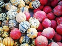 Pumpkins, colours, nature stock photos