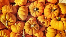 Pumpkins Royalty Free Stock Photos