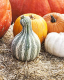 Pumpkins and Gords Stock Photo
