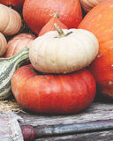 Pumpkins and Gords Royalty Free Stock Photo