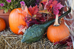 Pumpkins and gourd Royalty Free Stock Photos
