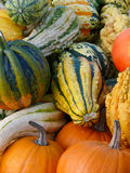 Pumpkins and Gourd Harvest II Stock Photo