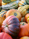 Pumpkins and Gourd Harvest III Stock Photo