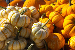 Pumpkins and gourd Stock Photography
