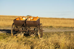 Pumpkins and Gourdes. Autumn pumpkins and gourds in a rustic farm implement Royalty Free Stock Image
