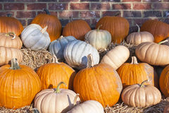 Pumpkins and gourds Stock Photos