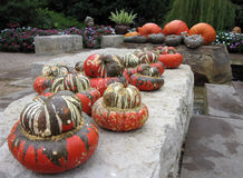 Pumpkins and Gourds Royalty Free Stock Photography