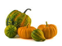 Pumpkins and Gourds 2. Mini pumpkins and gourds isolated on a white background Royalty Free Stock Photography