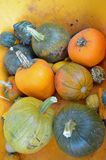 Pumpkins and Gourds Royalty Free Stock Photos