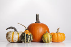 Pumpkins and Gourds Stock Image