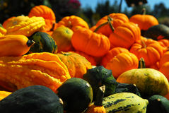 Pumpkins and gourds Stock Photos