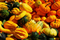 Pumpkins and gourds Royalty Free Stock Image