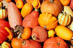 Pumpkins and gourds. Piled high as fall decoration Royalty Free Stock Images