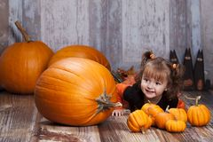 Pumpkins and gourds. Stock Photos