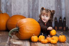 Pumpkins and gourds. Stock Images