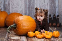 Pumpkins and gourds. Stock Image