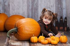 Pumpkins and gourds. Royalty Free Stock Photo