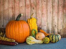 Pumpkins and gourds against old door backdrop. Royalty Free Stock Images