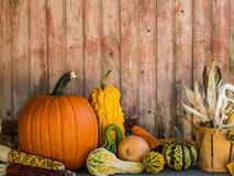 Pumpkins and gourds against old door backdrop. Royalty Free Stock Photos