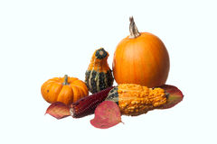 Free Pumpkins Gourds, And Leaves. Stock Image - 21641571