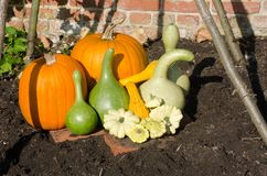 Pumpkins and Gourds arranged in garden Royalty Free Stock Photography