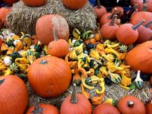Pumpkins and gourds. Stock Photo