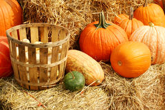 Pumpkins and gourds in a basket Stock Photo