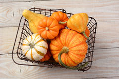 Pumpkins and Gourds in Basket Stock Photos
