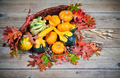 Pumpkins and Gourds Royalty Free Stock Images