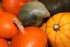 Pumpkins, gourds, colorful vegetables Stock Image