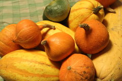 Pumpkins, gourds, colorful vegetables Royalty Free Stock Images