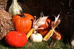 Pumpkins, gourds and corn Stock Photos