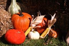 Pumpkins, gourds and corn Stock Photos