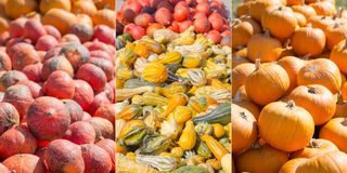 Pumpkins and Gourds in Different Shapes stock photos