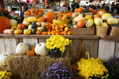 Pumpkins and gourds of different varieties royalty free stock image