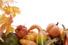 Pumpkins and gourds with fall leaves Royalty Free Stock Photography