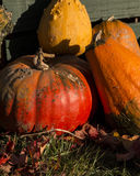Pumpkins and Gourds in Fall 2. Rochester Cider Mill Pumpkins and Gourds at the end of the day. Photograph is a close up of Pumpkins and Gourd against a green stock photo