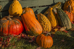 Pumpkins and Gourds in Fall Stock Images