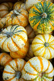 Pumpkins and gourds fresh picked from the farm Royalty Free Stock Image