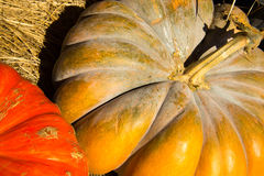 Pumpkins and gourds fresh picked from the farm Stock Image