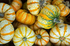 Pumpkins and gourds fresh picked from the farm Royalty Free Stock Photos
