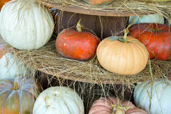 Pumpkins and gourds fresh picked from the farm Royalty Free Stock Photo