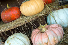 Pumpkins and gourds fresh picked from the farm Royalty Free Stock Photography