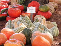 Pumpkins and Gourds Galore Royalty Free Stock Photography