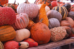 Pumpkins and Gourds. A group of assorted gourds at harvest time in New England royalty free stock photography