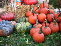 Pumpkins and gourds for the holidays. Royalty Free Stock Photos