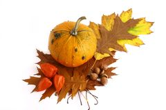 Pumpkins and gourds on isolate Royalty Free Stock Photos