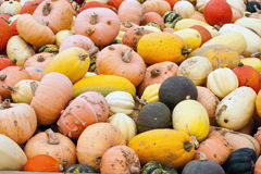 Pumpkins Gourds Landscape Royalty Free Stock Images